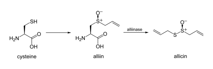 Cysteine-to-allicin-2D-skeletal.png