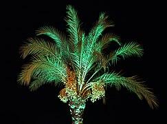 Date palm at night 2019 G2.jpg