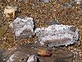 Dead Sea Salt 00.JPG