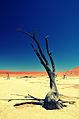 Deadvlei Baum.jpg