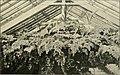Die Gartenwelt (1902) (20733352619).jpg