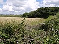 Disused railway near Leigh Farm - geograph.org.uk - 489249.jpg