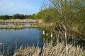 Doggetts Farm Fishery - geograph.org.uk - 157030.jpg