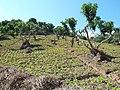 Doi Pui foothills, Chiang Mai. - panoramio.jpg
