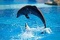 Dolphin show in Lisbon Zoo 03.jpg