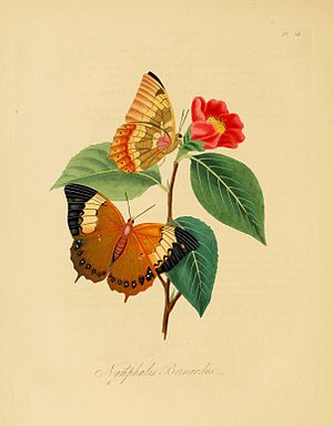 Edward Donovan - Plate from An Epitome of the Natural History of the Insects of China