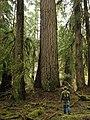 Douglasfir people forest braidgirl NPS Photo (16749602624).jpg
