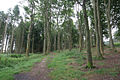 Dronley Wood - geograph.org.uk - 48581.jpg