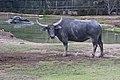 Dubbo Zoo (3149146417).jpg