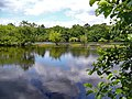 Earlswood Lake - panoramio (7).jpg