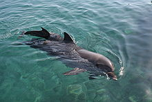 Eilat - Dolphin reef.jpg