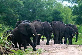 Selous Game Reserve - Image: Elephants, Selous Game Reserve