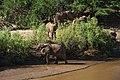 Elephants of Isiolo.jpg