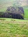 Elghope Strip from Kaim Rig - geograph.org.uk - 421692.jpg