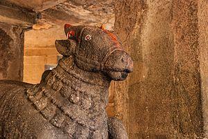 Pataleshwar - Exclusive close up of Nandi Bull