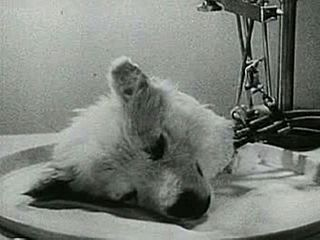 <i>Experiments in the Revival of Organisms</i> 1940 film by D.I. Yashin