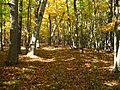 Fall-nature-trail - West Virginia - ForestWander.jpg