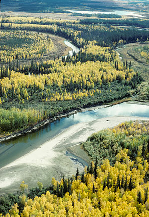 Yukon Flats National Wildlife Refuge - Fall on the Yukon Flats National Wildlife Refuge