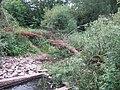 Fallen tree in mill leat - geograph.org.uk - 1953615.jpg