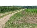 Farm track leading north - geograph.org.uk - 1349404.jpg