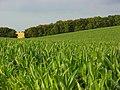 Farmland, East Ilsley - geograph.org.uk - 902383.jpg