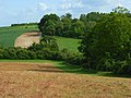 Farmland and woods, Shipton Bellinger - geograph.org.uk - 440639.jpg
