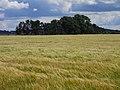 Farmland near Hutton-in-the-Forest - geograph.org.uk - 1567641.jpg
