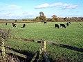 Field Near Pendeford - geograph.org.uk - 282537.jpg