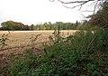 Field adjoining Carman's Lane Belt - geograph.org.uk - 1044930.jpg