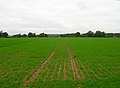 Field near Moat Farm - geograph.org.uk - 268350.jpg