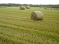 Field of Bales - geograph.org.uk - 564742.jpg