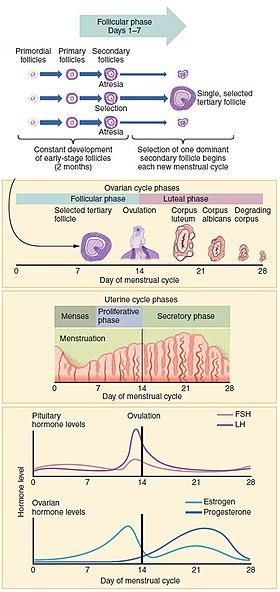 sensazione di bagnato prima ciclo mestruale - 28 images - ciclo ...