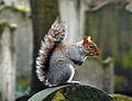 Flickr - Duncan~ - Squirrel snapshot.jpg