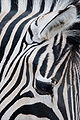 Flickr - bslmmrs - Barcode horse.jpg