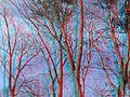 Flickr - jimf0390 - JimF 11-15-11 0012a.jpg