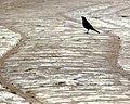 Flickr - lo.tangelini - A orilla del camino.jpg