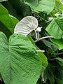 Flora, Fauna or Faery.jpg