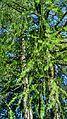 Flora of Esino Lario in July 2016.jpg