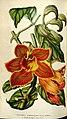 Flore des serres et des jardins de l'Europe (8595875240).jpg