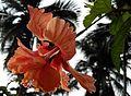 Flower1044.jpg
