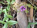 Flower 4 Sq Rock 681.jpg