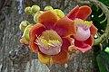 Flower power (17546876733).jpg