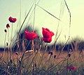 Flowers (66846659).jpeg