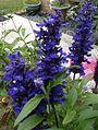 Flowers in my backyard 7.jpg