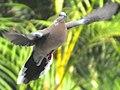 Flying (11319760005).jpg