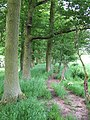 Footpath by Little Acorn Coppice, Shropshire - geograph.org.uk - 456601.jpg