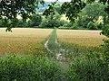 Footpath crossing wheat field towards Glatting Farm - geograph.org.uk - 1405683.jpg