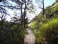 Forêt de Finges.jpg