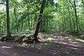 Forêt domaniale de Bois-d'Arcy 32.jpg