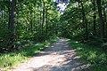 Forêt domaniale de Bois-d'Arcy 65.jpg